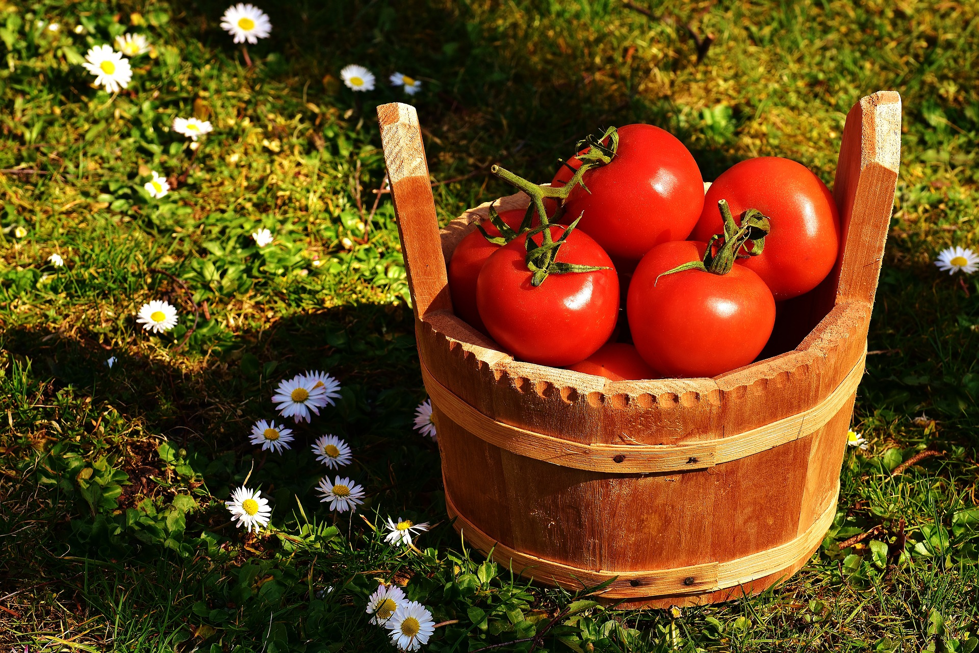 澄清蕃茄濃縮汁
